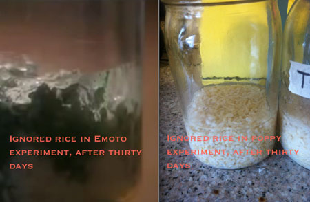ignored jar on day 30 compared to Emoto experiment